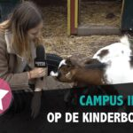 #308 – Op de Kinderboerderij